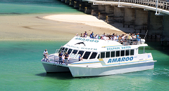 Amaroo Dolphin and Whale Watch Cruise