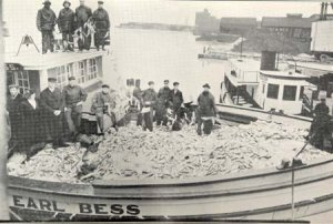 Boat full of Lake Herring harvested in 1918 from Lake Erie