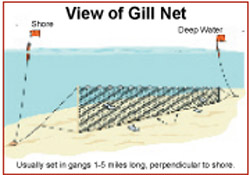 Gill Net Illustration