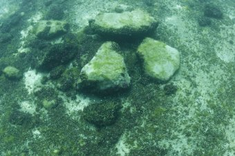 Images from the floor of Lake Huron that show where Paleo hunting blinds may have existed thousands of years ago. (Ashley Lemke / UMich)