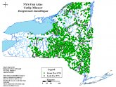 Lake Ontario tributaries