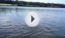 Carbrook Golf Club Shark in the Lake