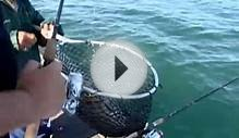 Catching Yellow Perch on Lake Erie, New York