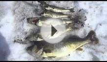 Lack of Oxygen killing all sizes of fish on Lake of The