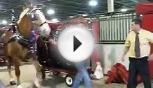 Michigan Great Lakes International Draft Horse Show (B