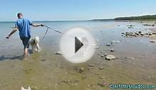 Siberian Husky Puppy Swims in Lake Huron and Rides in the