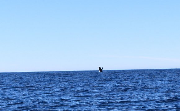 Whale in Lake Superior